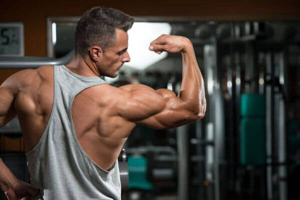 Biceps Muscles Anatomy