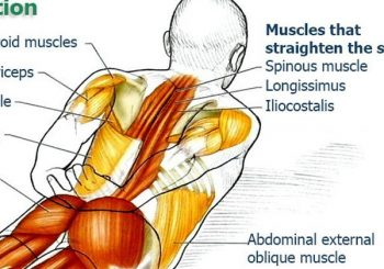 Erector Spinae Stretch and Extension
