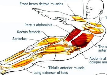 Roll-Up – Abdominal Exercises for Spine and Core Stabilization, Part 2