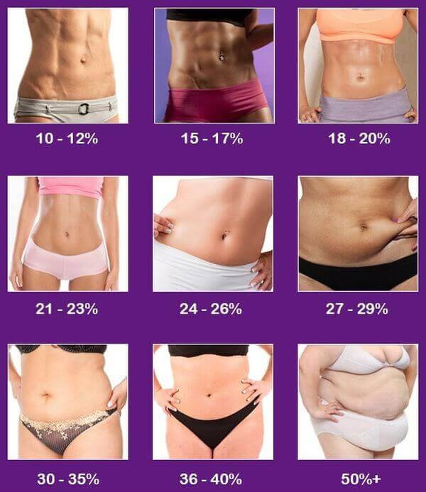body composition chart female